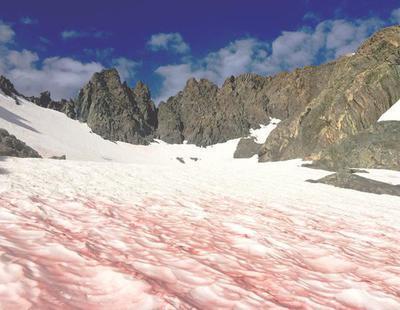 El extraño caso de la nieve con ríos de sangre que atemoriza a la comunidad científica
