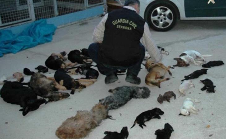 El Parque Animal de Torremolinos sometía a los animales y los sacrificaba a perros y a gatos