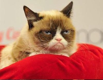 Indemnizan con 700.000 dólares al gato Grumpy Cat por usar su imagen para vender cafés
