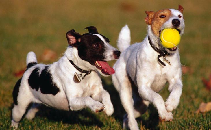 Queda prohibido cortar las orejas y el rabo a las mascotas en España