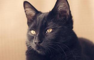 Los gatos negros están siendo abandonados porque no salen bien en los selfies