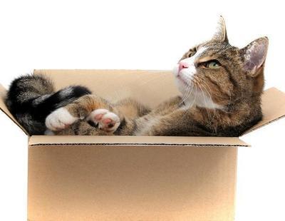 ¿Por qué los gatos aman las cajas de cartón?