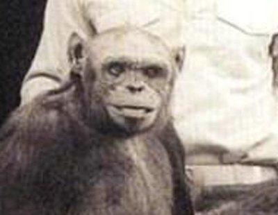 'Humanzee': así fecundó con éxito un laboratorio a un chimpancé con semen humano en 1920