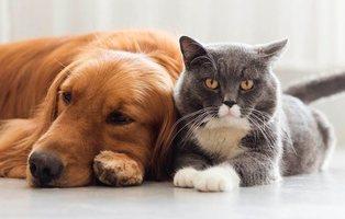 Un estudio confirma que los que tienen gatos son más inteligentes que los que eligen perros