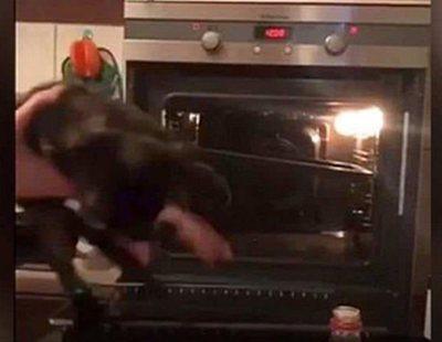 """Un adolescente mete a su gato en un horno a 300ºC y lo sube a las redes para """"divertirse"""""""