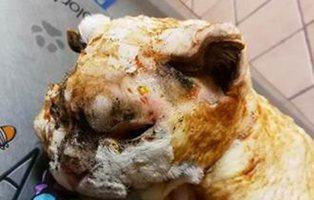 Buscan a los responsables de quemar vivo a un gato en Vigo