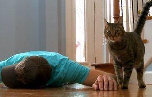 Finge su muerte para ver la reacción de su gato: su respuesta fue legendaria
