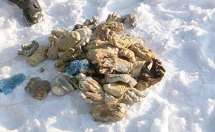 Las manos se encuentan en estado de putrefacción y no se conoce qué pudo ocurrir. /Foto: SiberiaTimes