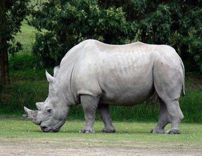 Nueva extinción de especies: ¿Hacia dónde vamos?