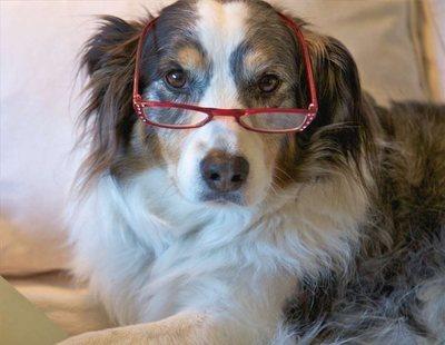 Las residencias para perros ancianos ya son una realidad