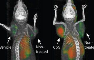 La vacuna contra el cáncer probada con éxito en ratones podría comercializarse muy pronto
