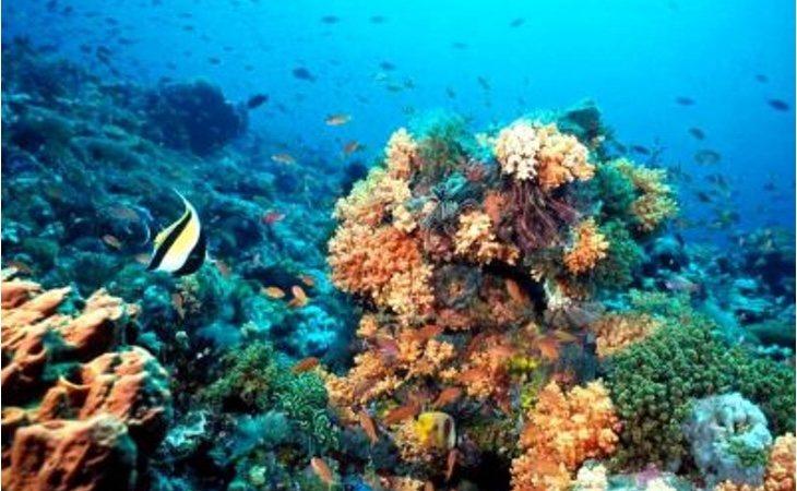 La zona se encuentra entre los 130 y los 300 metros de profundidad