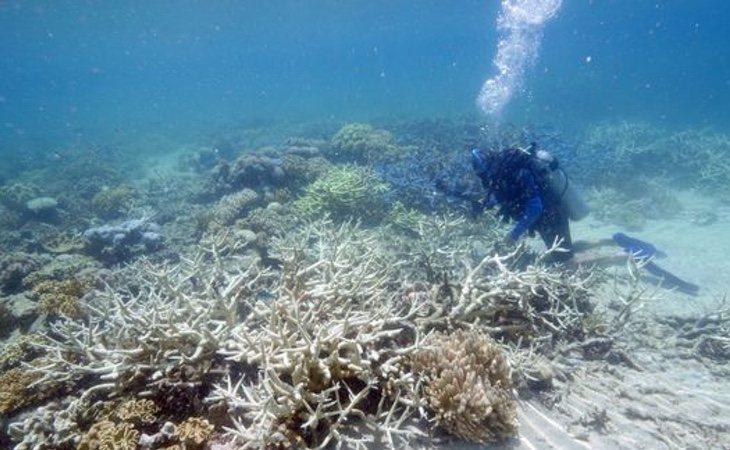 Losarrecifes profundos tropicales están justo debajo de los arrecifes poco profundos
