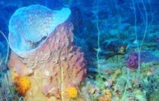 Descubren un nuevo océano lleno de especies desconocidas