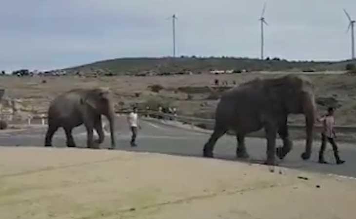 Domadores guiando a los elefantes a un lugar seguro