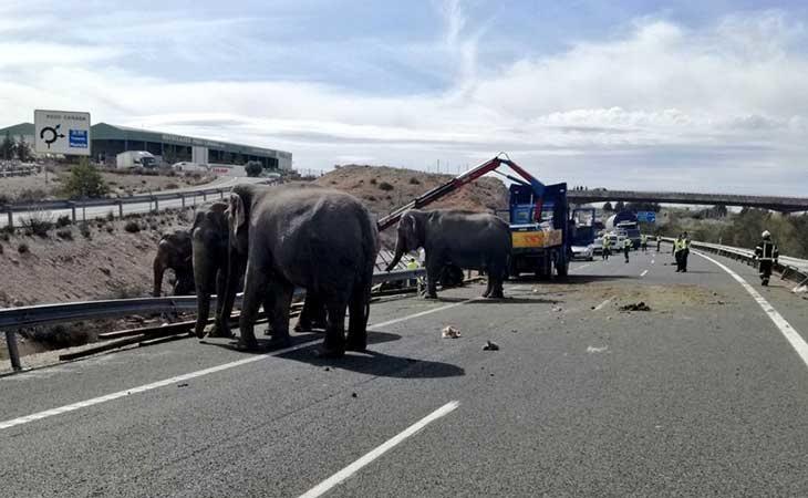 El accidente con los elefantes acontecido en Albacete