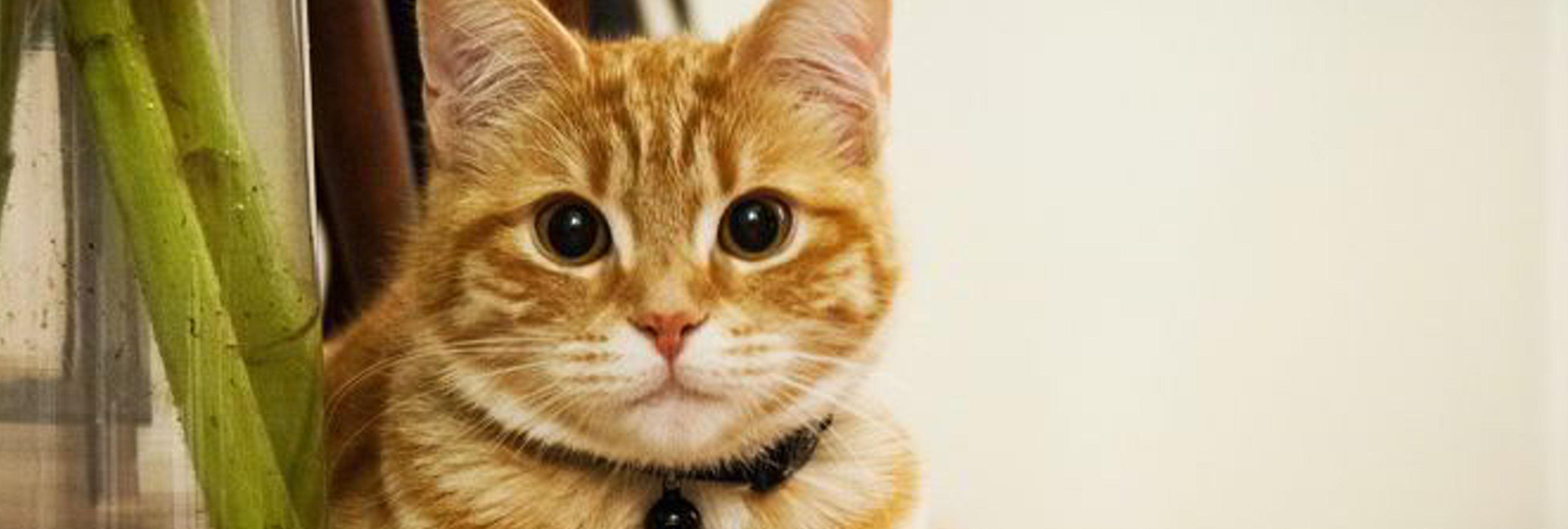 Inventan un dispositivo para oír igual que un gato: estos son sus beneficios para la salud