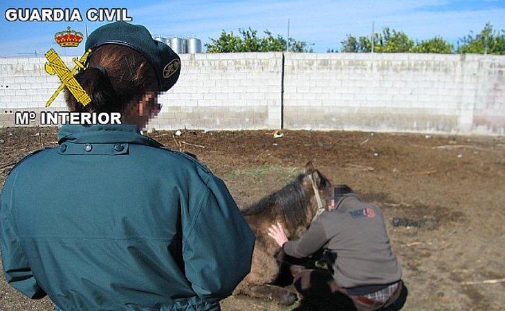 La Guardia Civil colocó cámaras en la cuadra para conocer la identidad de quien abusaba de los animales