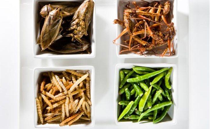 100 gramos de espinacas congeladas pueden contenter 50 ácaros, pulgones y un poco de oruga