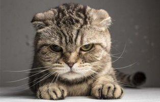 Estas son las razones por las que los gatos son bordes y antisociales, según la ciencia