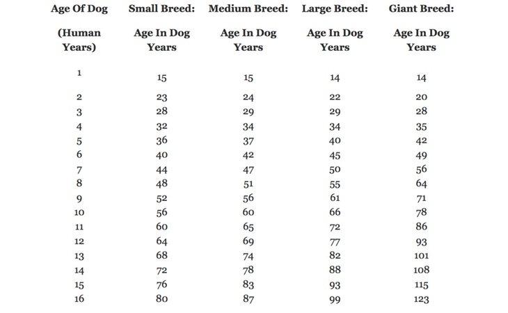 Tabla de referencia para saber la edad de tu perro