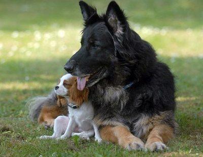 Un año humano no equivale a siete años de un perro, según un estudio