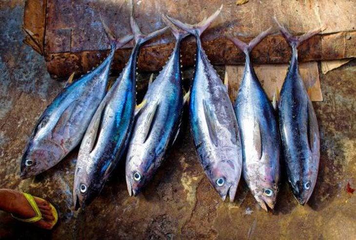 Hay especies de pescado que podrían verse perjudicadas
