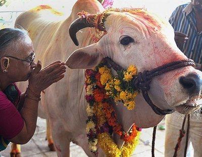 Linchan hasta la muerte a un joven por presuntamente matar una vaca en India