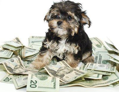 Un perro hereda un millón de euros de su dueño muerto