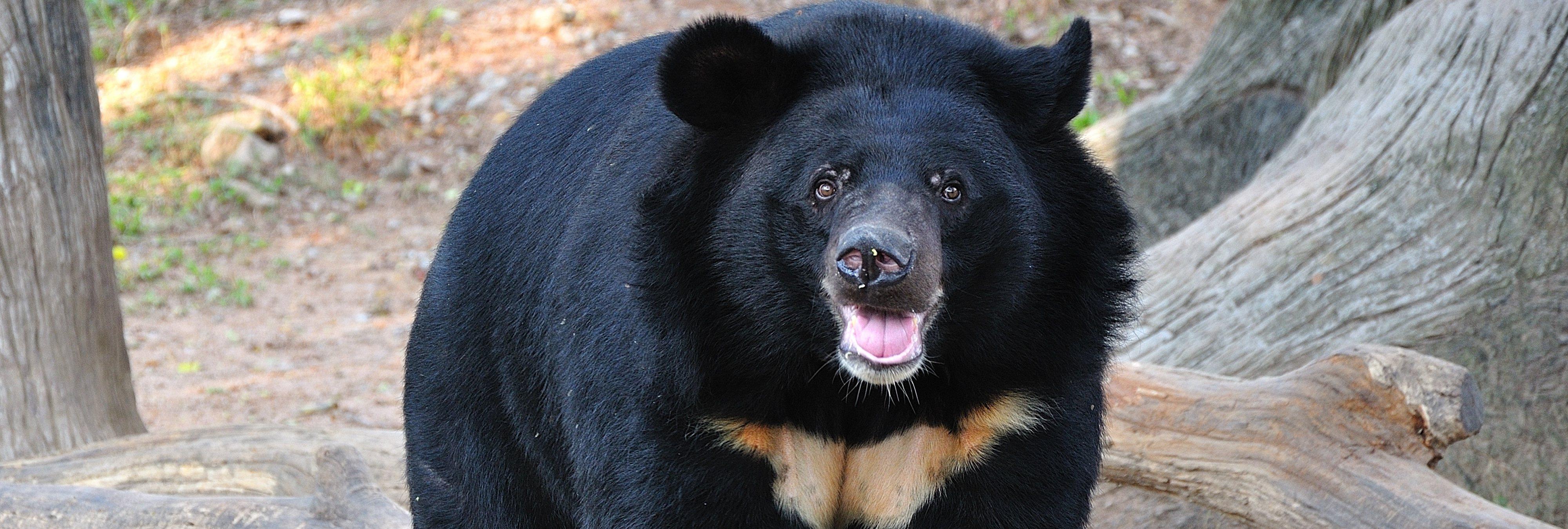 Un hombre cría durante dos años a un oso creyendo que era un perro