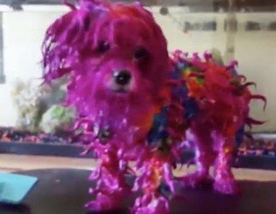 Teñir el pelo a tu mascota, la última (y peligrosa) moda rechazada por los animalistas