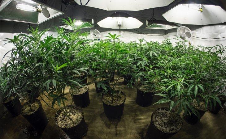 La legalización del cannabis podría reducir la percepción del riesgo de esta droga