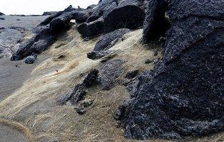 La 'melena' dorada que inunda Hawái y que puede terminar con tu vida