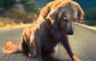 """Carta de un perro abandonado: """"¿Dónde están mis padres?"""""""