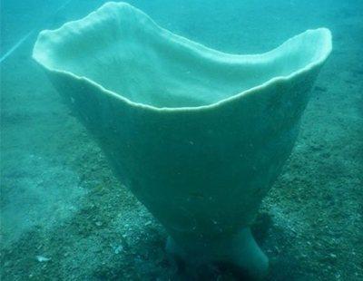 Las esponjas marinas de un metro que reaparecen en Camboya tras más de un siglo extintas