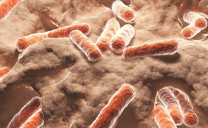 La bacteria comecarne una de las más peligrosas