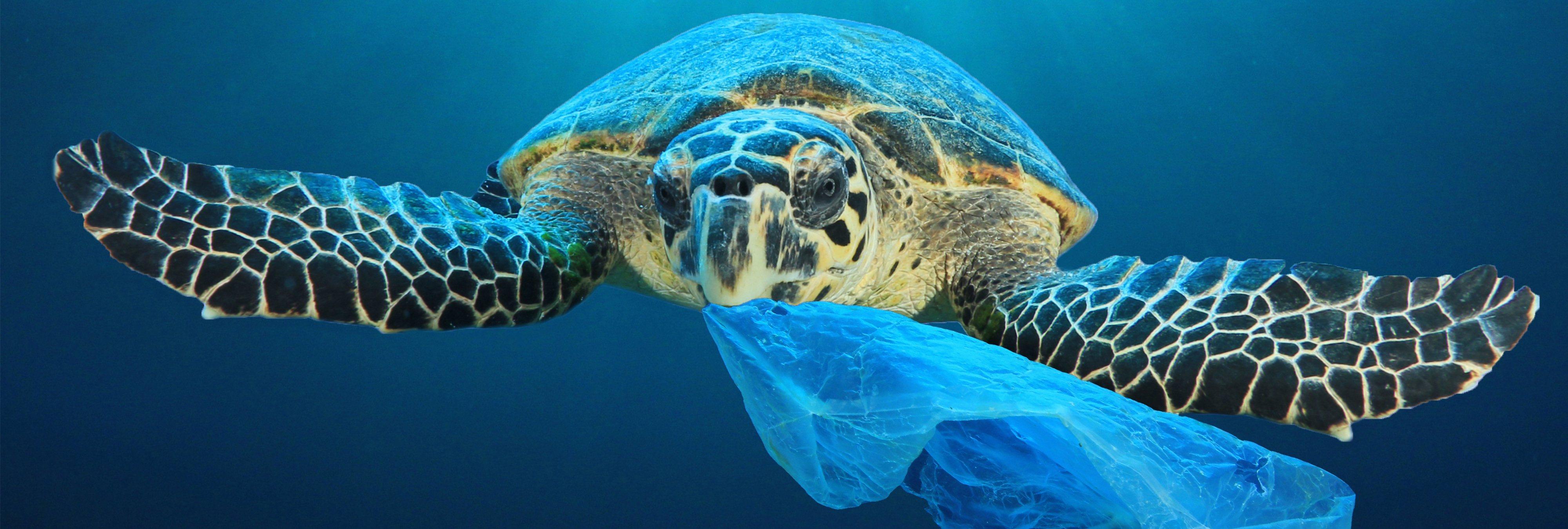 Un joven emprendedor hará posible limpiar los océanos de plásticos en cinco años