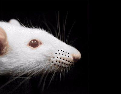 Una oficina de la Seguridad Social permanece abierta al público con una rata en su interior