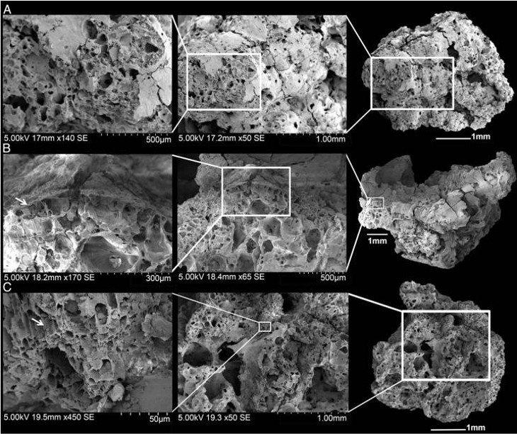 Así se ven las migas en el microscopio