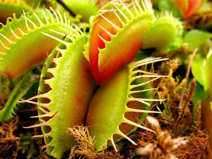 Las plantas ocultan grandes cosas
