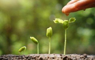 Las plantas ven, recuerdan y gritan cuando las cortas: sus conductas más desconocidas