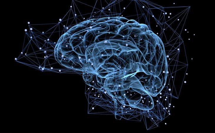 El cerebro se ve afectado por el consumo de cerveza