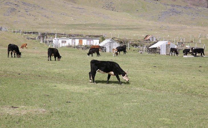Sus habitantes llevan una economía basada en la subsistencia. En imagen, uno de los pastos que se encuentran en la isla