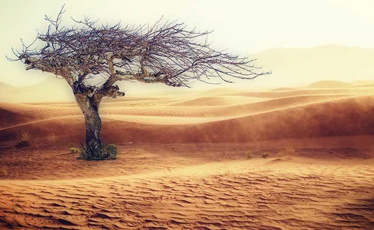 En 50 años algunas zonas de la Tierra serán incompatibles con la vida