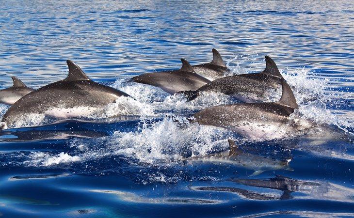 El delfín había sido apartado de su manada