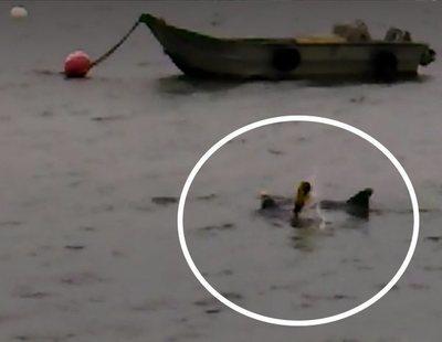 La historia de Zafar, el delfín que cerró una playa tras buscar sexo con los bañistas