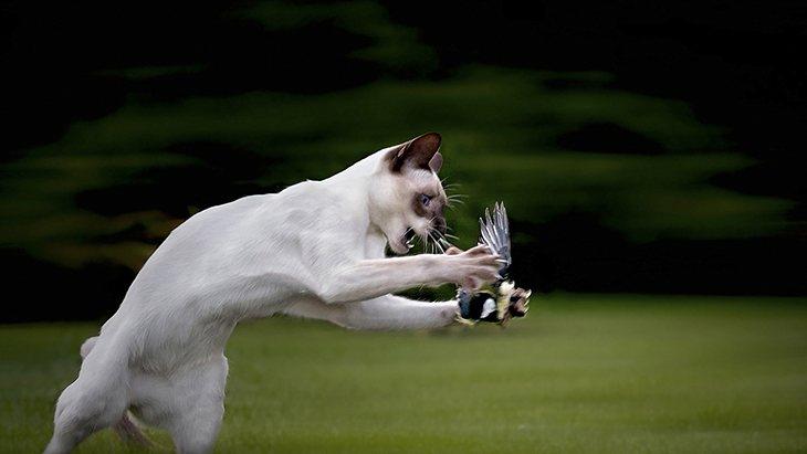 La caza de los gatos a aves es la causa de su prohibición