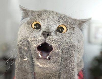 Un pueblo de Nueva Zelanda quiere prohibir los gatos