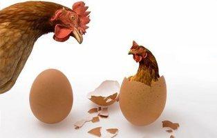 ¿Qué fue antes, el huevo o la gallina? La física cuántica responde