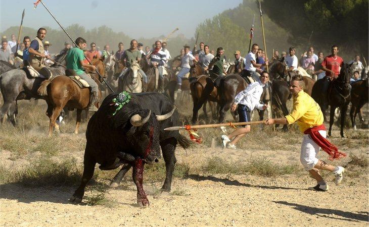 El toro es asediado por cientos de personas